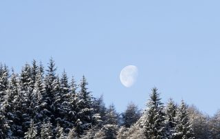The moon rising over a snow-flecked treelike.